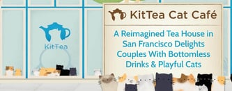 KitTea Cat Café Delights Couples With Playful Drinks & Cats