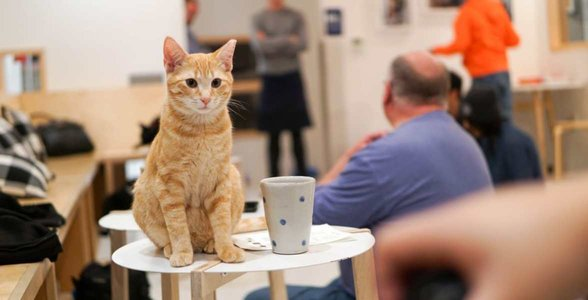 Photo of a cat in KitTea Cat Café