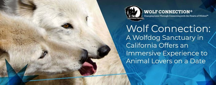 Wolf Connection A Wolfdog Sanctuary For Animal Lovers On A Date