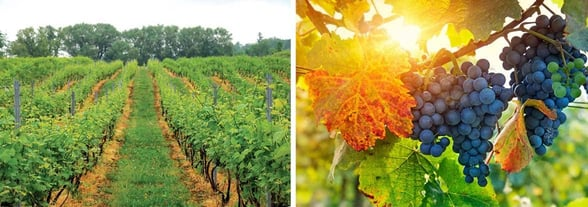Collage of photos from the Niagara Wine Trail