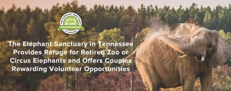 The Elephant Sanctuary Offers Couples Volunteer Opportunities