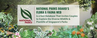 Flora & Fauna Web Helps Couples Explore Singapore