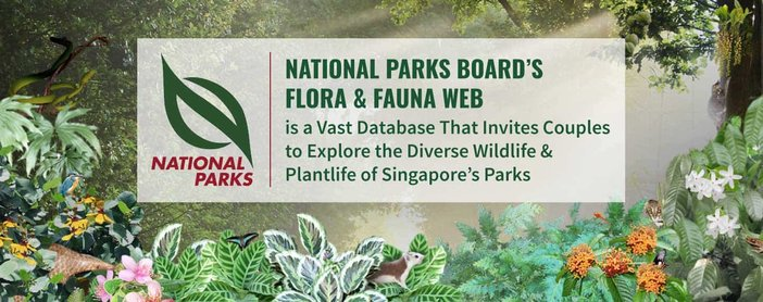 National Parks Board's Flora & Fauna Web is a Vast Database That Invites Couples to Explore the Diverse Wildlife & Plantlife of Singapore's Parks