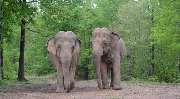 Photo of elephants at The Elephant Sanctuary in Tennessee
