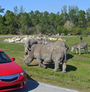 Photo of rhinos