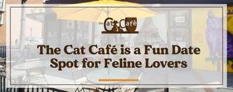 The Cat Café is a Fun Date Spot for Feline Lovers