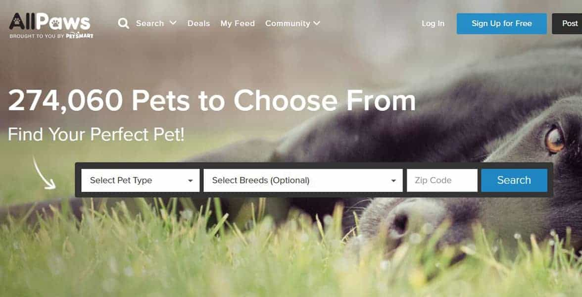 Screenshot of AllPaws' website