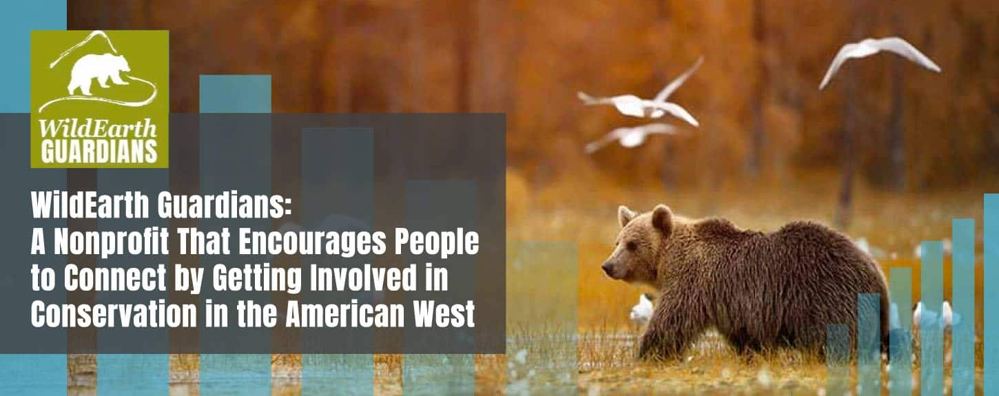 WildEarth Guardians: A Nonprofit That Encourages People to Connect by Getting Involved in Conservation in the American West